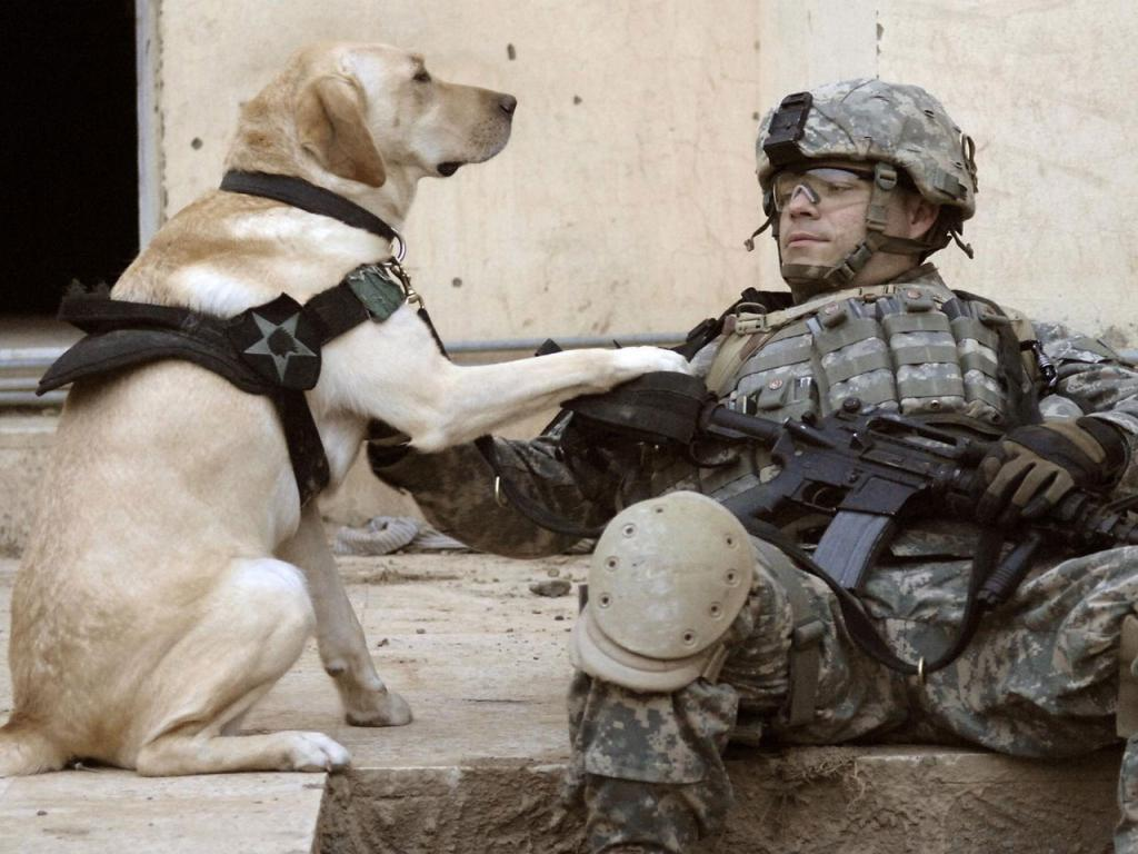 Labrador Retriever - Life as an Army Dog Wallpaper #2 1024 x 768